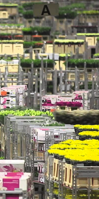 Flexibility: both a strength and weakness of FloraHolland